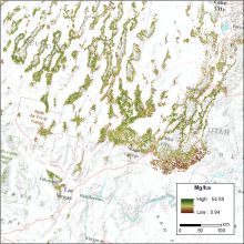Map of live aboveground tree biomass for a portion of the Great Basin, USA.