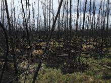 Image of a burned field site.