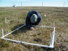 Surveying vegetation plots