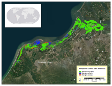 Mangrove extent, gain, and loss.