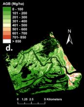 aboveground biomass density in zambezi river delta