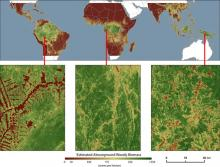 Aboveground live biomass in the year 2000 (from Zarin et al., 2016).